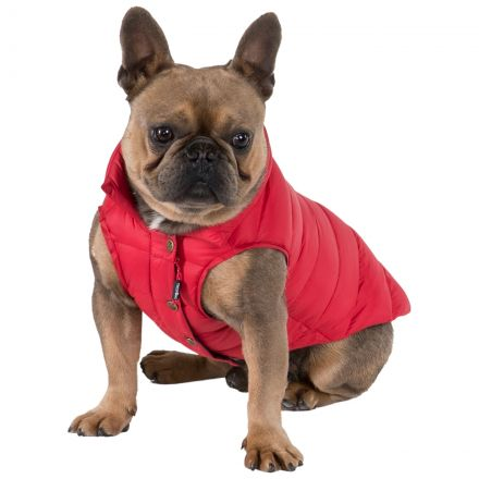 Dogby Down Dog Coat