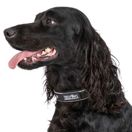 Keira Medium Reflective Neoprene Dog Collar in Black