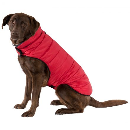 Kimmi Quilted Dog Coat