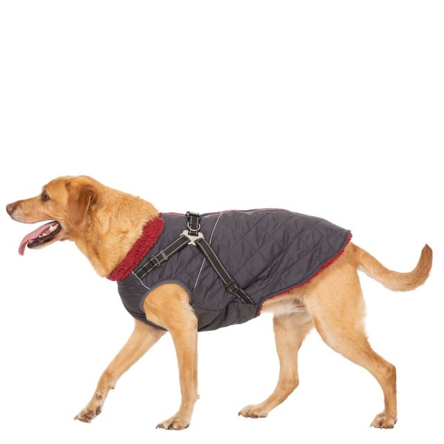 Hercules Large Windproof 2 in 1 Dog Coat - CBN