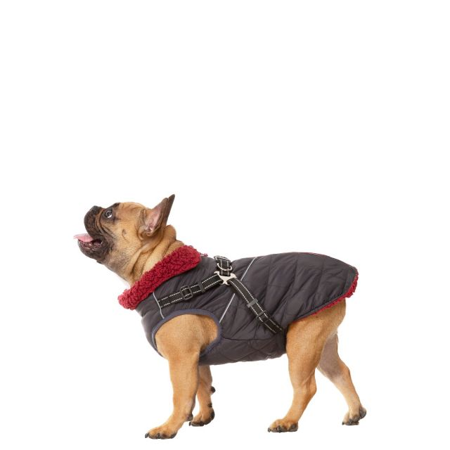 Hercules Small Windproof 2 in 1 Dog Coat - CBN