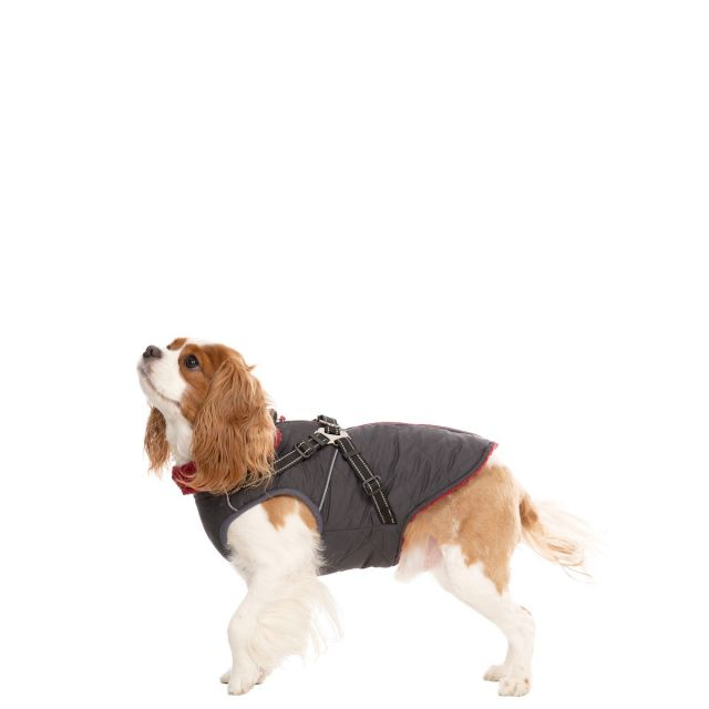 Hercules XS Windproof 2 in 1 Dog Coat - CBN
