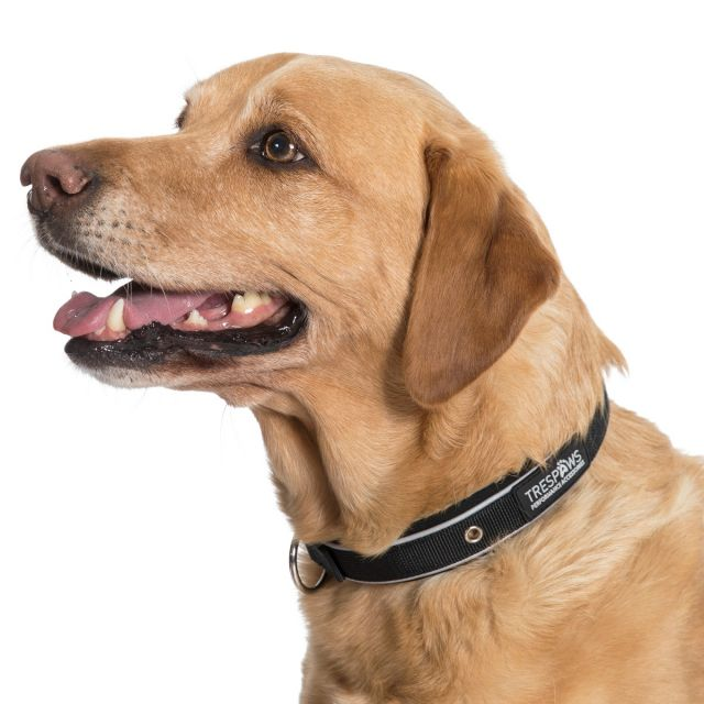 Keira Large Reflective Neoprene Dog Collar in Black