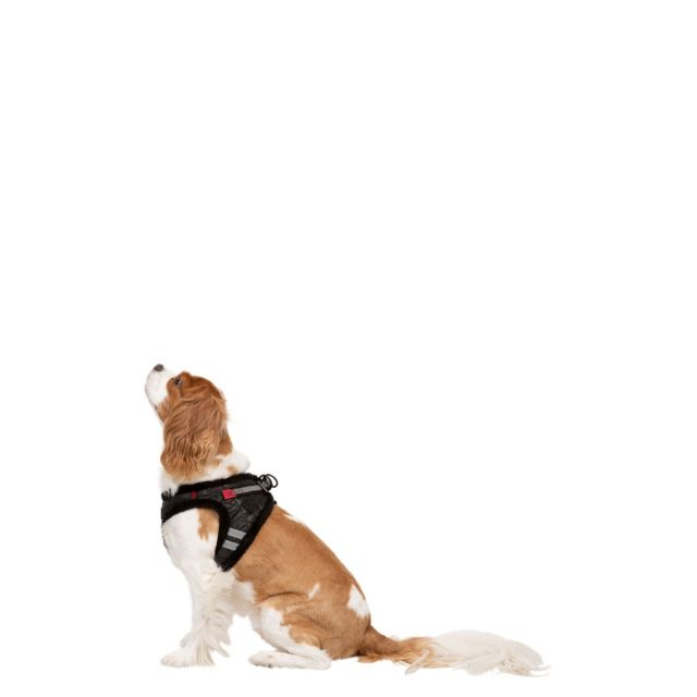 Trespass X-Small Trespaws Pet Harness Lola Black