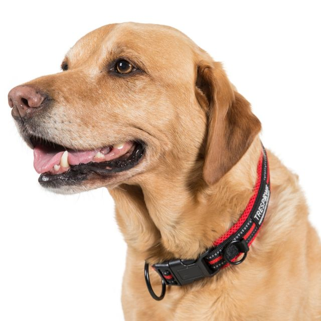 Scooby Large Red Reflective Padded Dog Collar in Red