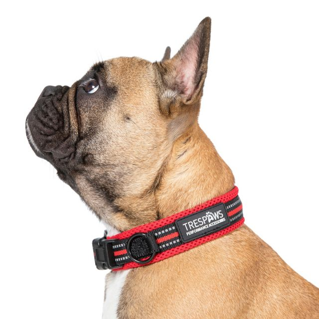 Scooby Small Red Reflective Padded Dog Collar in Red