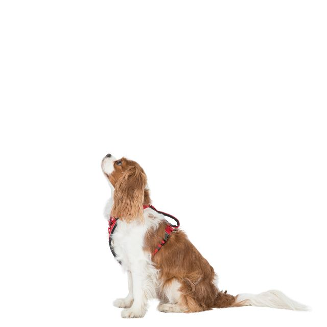 TANKED - DOG HARNESS in Red